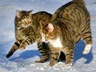 Darlings Sanni and Lenni - website of the cat photos